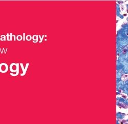Classic Lectures in Pathology: What You Need to Know: Neuropathology 2018 (Videos)